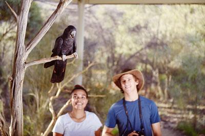 Cockatoo on a tree