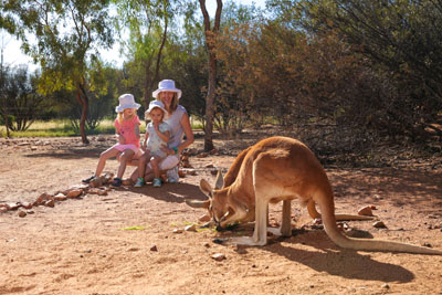 Kangaroo with family