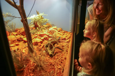 Children looking into lizard display