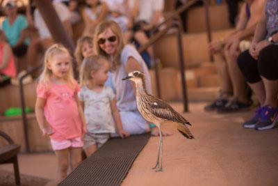 Curlew with children