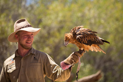 Eagle on trainers arm